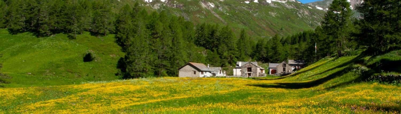 Frühling Stockalperweg Chluismatte