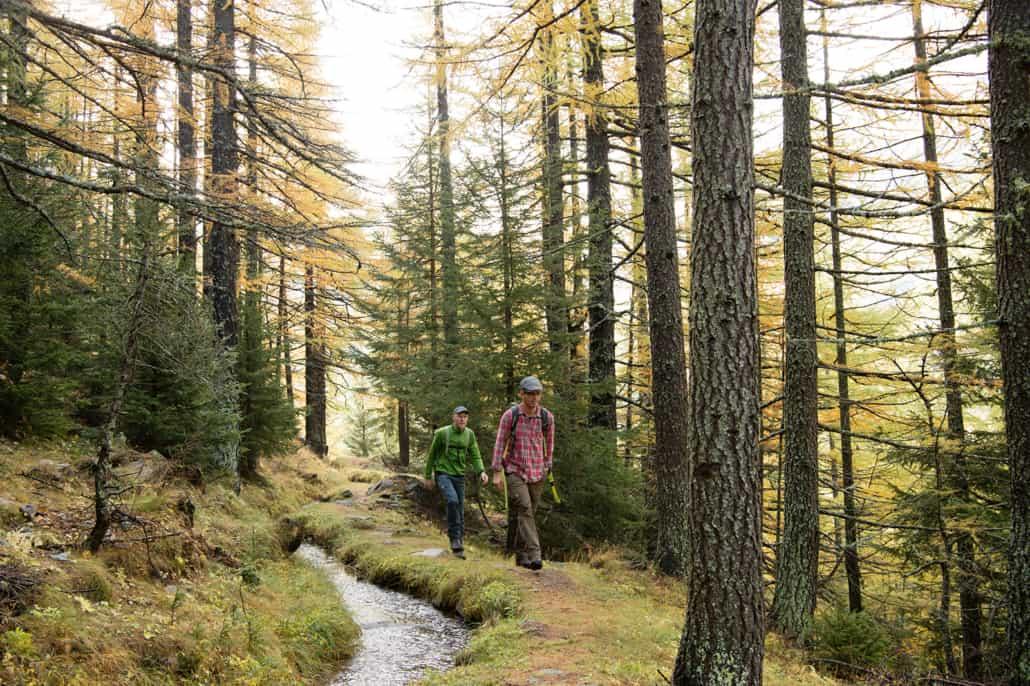 Wandern durch den Lärchenwald